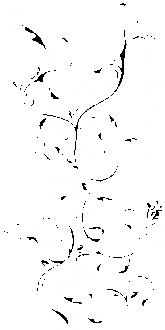 Ljiljan i vinska loza